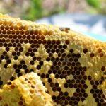 蜂王乳的食用禁忌!什麼樣的人要小心蜂王乳!蜂王乳的保存該怎麼做?