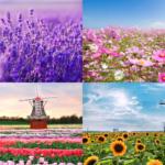 【台灣花季詳細介紹】什麼季節該賞什麼花?梅花、薰衣草、紫藤花、金針花海該哪裡賞?賞花秘笈在這篇